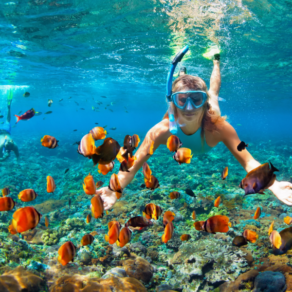 Snorkeling with The Whale Sharks or Butanding in the Philippines